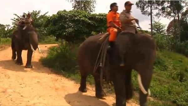 針對尚未撲滅的火災,印尼打火弟兄請出已被訓練好的23頭大象與他們一起深入林地,四處巡視尚未撲滅的火星。(圖擷自GlobalNews)