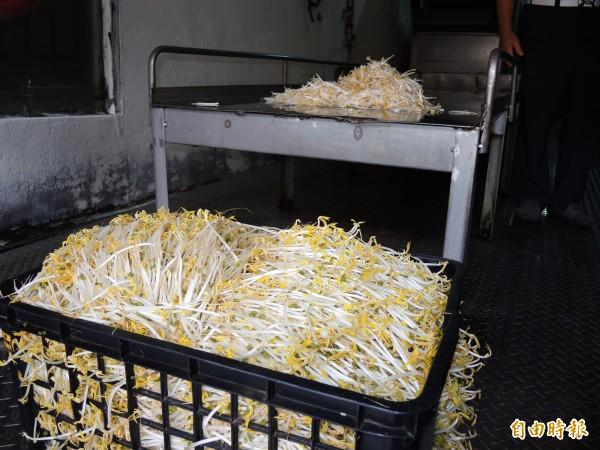 苗栗女子黃語慧使用工業用漂白劑(俗稱保險粉)浸泡豆芽菜,被判刑。示意圖。(資料照,記者林良昇攝)