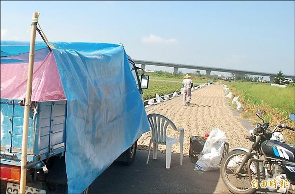 農民為守護花生,在小貨車上掛起蚊帳徹夜守候。(記者鄭旭凱攝)