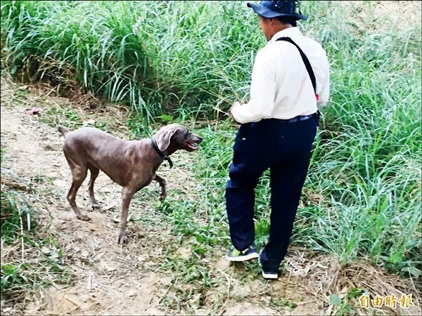 搜救犬隨民眾上山搜山找阿嬤。(記者張聰秋攝)