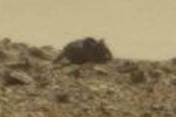 一名太空迷在NASA的火星照片中發現一個可疑黑影,若把黑影放大一看,這黑影像極了一隻巨大老鼠。(圖擷自SWNS)