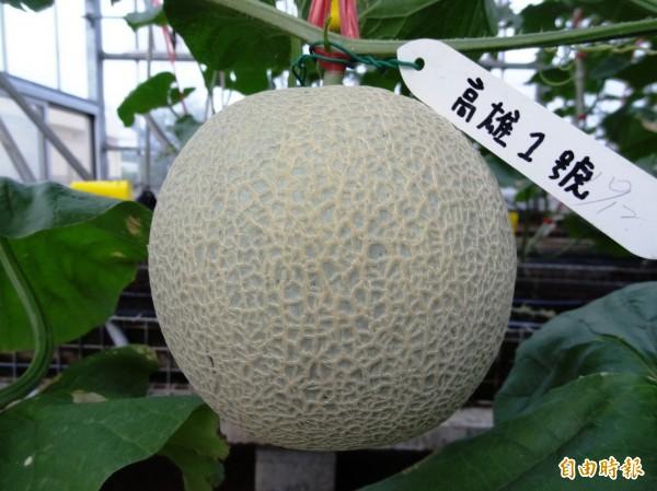 高雄區農業改良場育成的新品種洋香瓜「高雄1號─綠帝」。(高雄農改場提供)