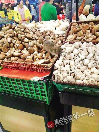 中國1名周小姐日前在超市消費時,竟在蘑菇區摸到一隻老鼠。(圖取自重慶晚報)
