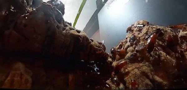 日本靜岡縣一家動物園在園區內設置「蟑螂塔」,高約80公分塔座爬滿蟑螂,而且沒有用玻璃隔開,完全是開放空間。(圖擷取自朝日新聞)