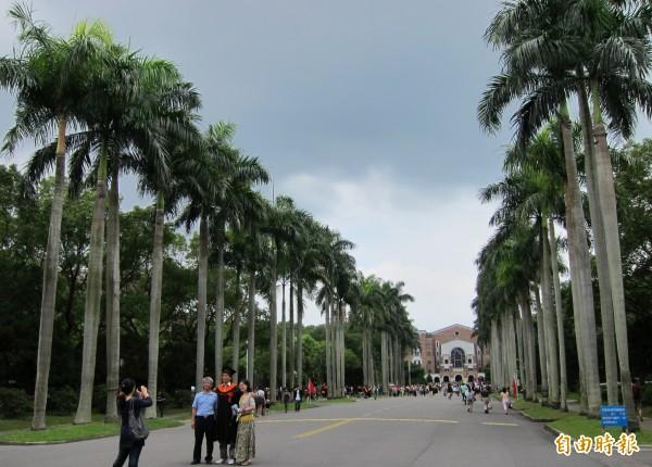 台灣大學最有名氣的美景就是「椰林大道」,椰林大道兩旁種植非常多的杜鵑,散步其中最能感受台大校園之美。(資料照,記者胡清暉攝)