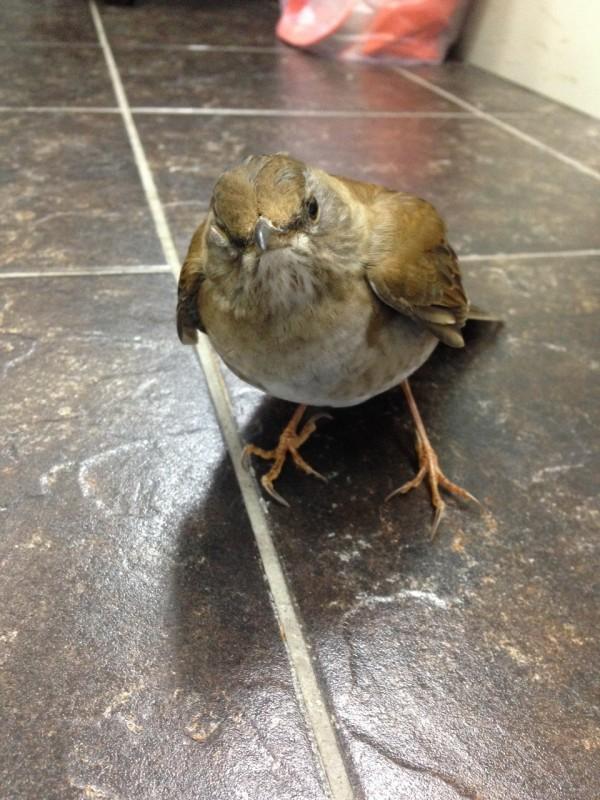 基隆市首次有鳥禽驗出H5N2禽流感病毒。(基隆市動物保護防疫所提供)
