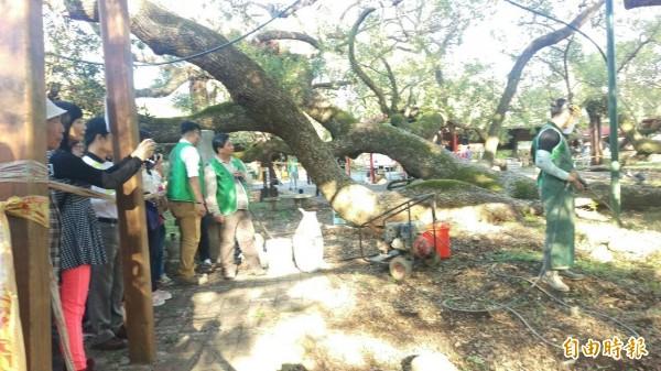 劉東啟教授與學生示範水療刀法及氣爆法的救樹技術,除愛樹人之外,連果農也來觀摩。(記者陳品竹攝)