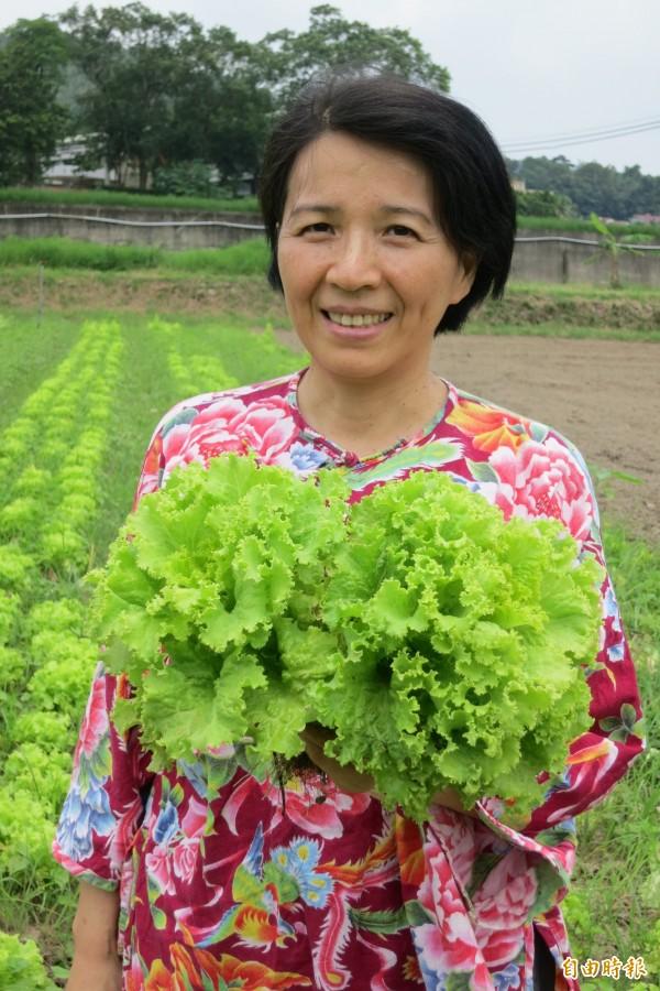 以生產萵苣與培根所產生的碳量來比較,萵苣整整比培根的碳排放量要高出3倍。(資料照,記者鍾麗華攝)
