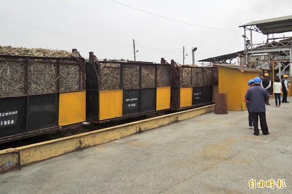 糖廠開工,來虎尾就可看到滿載甘庶的「五分仔車」。(記者廖淑玲攝)