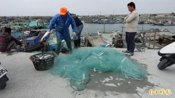 雲林縣口湖鄉台子村漁港漁民捕獲烏魚,但數量不多。(記者鄭旭凱攝)