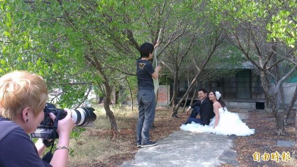 宿舍區內欖李紅樹林遍生,配合古樸的建築,前往拍攝婚紗的新人絡繹不絕。(記者蔡文居攝)