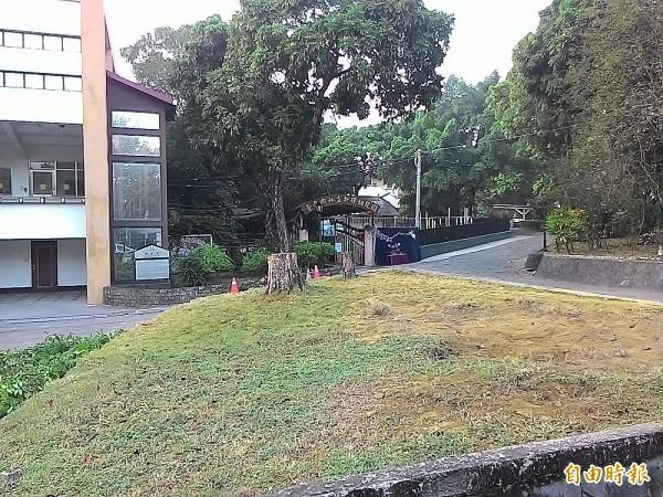 南神位於青年路新樓幼兒園大門前的二棵龍眼樹被砍了。(記者蔡文居攝)
