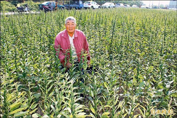 透過觀摩說明會,讓農民更了解胡麻的栽種方式。(記者林孟婷攝)