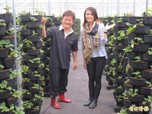 林明賢(左)與女兒林欣螢投入栽種無毒、天然的草莓產業。(記者林孟婷攝)