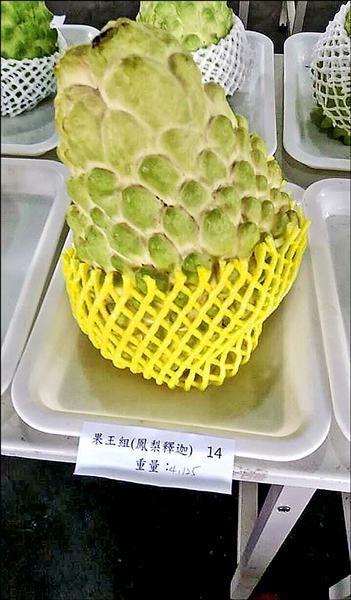 參賽果王組鳳梨釋迦最大粒,重達4.125斤,創紀錄。(記者陳賢義攝)