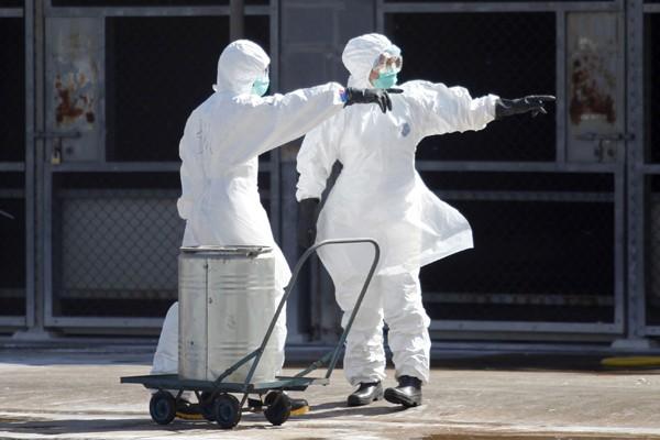圖為工人撲殺染病禽類。(資料照/法新社)