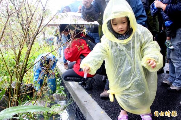 雖然早上細雨,許多父母仍帶著小孩到大安森林公園,體驗野放螢火蟲的樂趣。(記者郭逸攝)