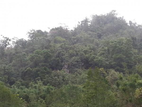 太平酒桶山區,今天早上8點多也下了約30分鐘的霰,樹梢上可看白色結晶物。(洪學聰店長提供,記者陳建志翻攝)