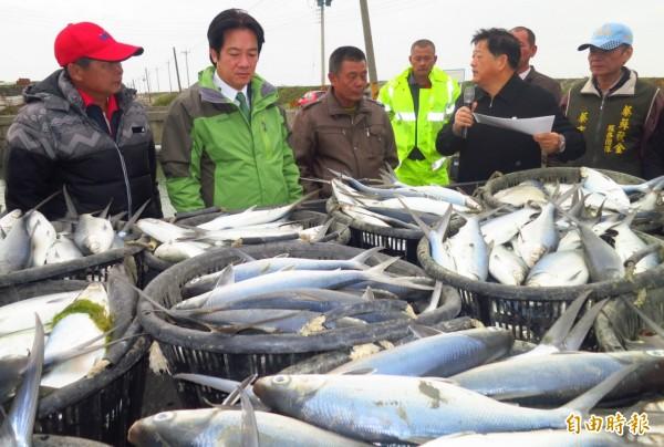 最強寒流造成台南市濱海北門、七股、將軍、學甲等地養殖漁業災情慘重,市長賴清德(左2)到七股勘災。(記者楊金城攝)