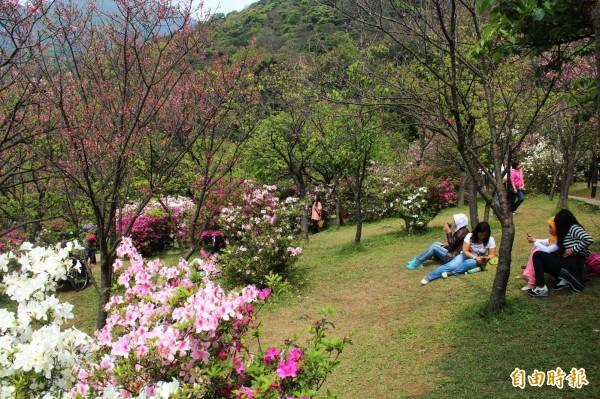 去年因蘇迪勒及杜鵑颱風影響,許多櫻花生長週期被打亂、提前開花,但在今年這波寒流作用下,櫻花有機會開得更多。(資料照,記者鍾泓良攝)