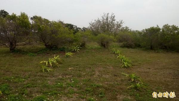 環保局表示,一期掩埋場經過綠美化植栽後已將土地歸還給林務局保管。(記者蔡文居攝)