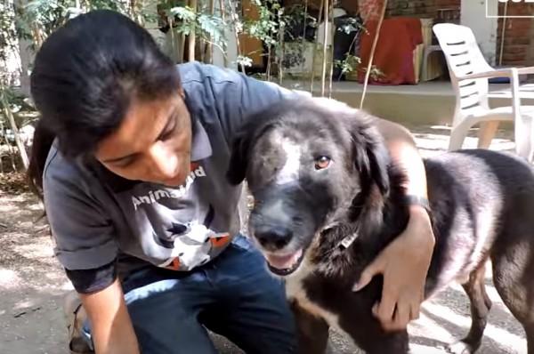 印度黑狗「卡魯」3個月前臉幾乎爛光,如今重獲新生的樣貌令人感動。(圖擷自YouTube)