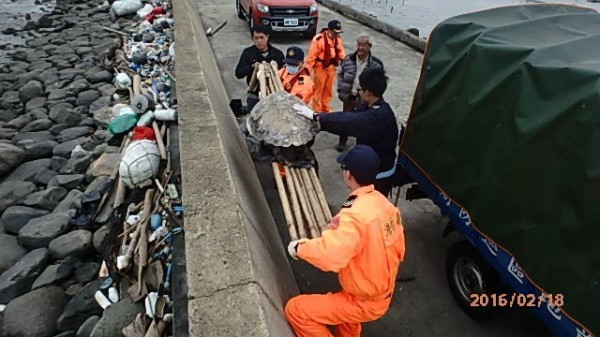海巡人員昨天將死亡多時的赤蠵龜抬上岸,交由成功大學教授王建平帶回研究死因。(四二岸巡大隊提供)