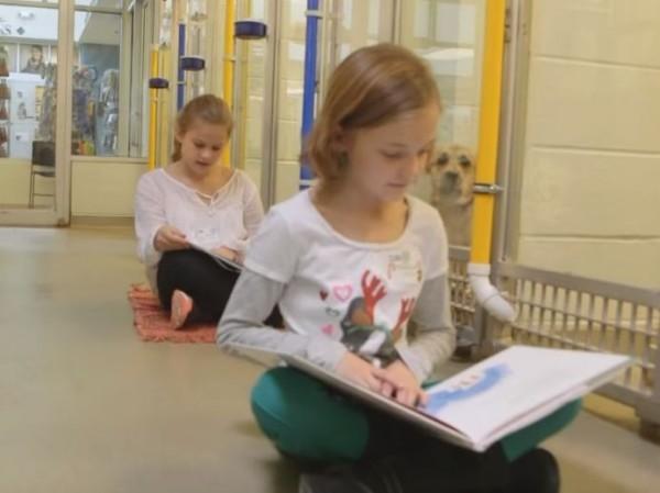 收容所伙伴閱讀計畫,能夠訓練小朋友的語言能力與同理心,也能讓小狗學會與人類接觸,以提高認養率。(翻攝自YouTube)