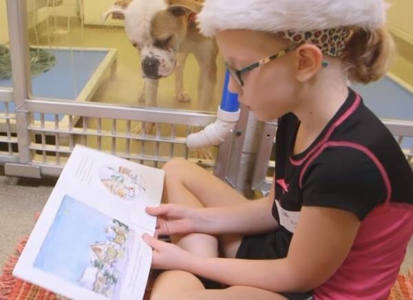 美國密蘇里州的動物收容所中,孩子們席地而坐,為狗朗讀。(翻攝自YouTube)