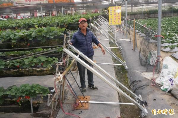 高架草莓盆因地震震歪了,業者緊急用鋼架支撐、穩固結構。(記者林孟婷攝)