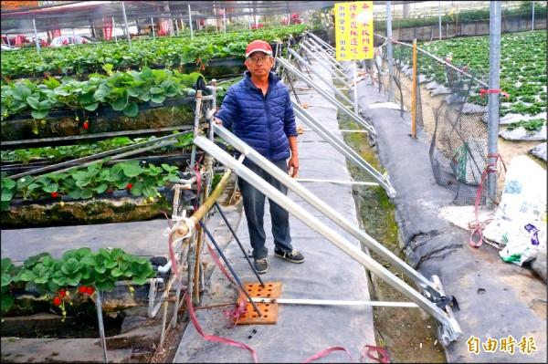 草莓園的高架因地震而傾斜,業者趕緊用鋼架支撐以確保安全穩固。 (記者林孟婷攝)