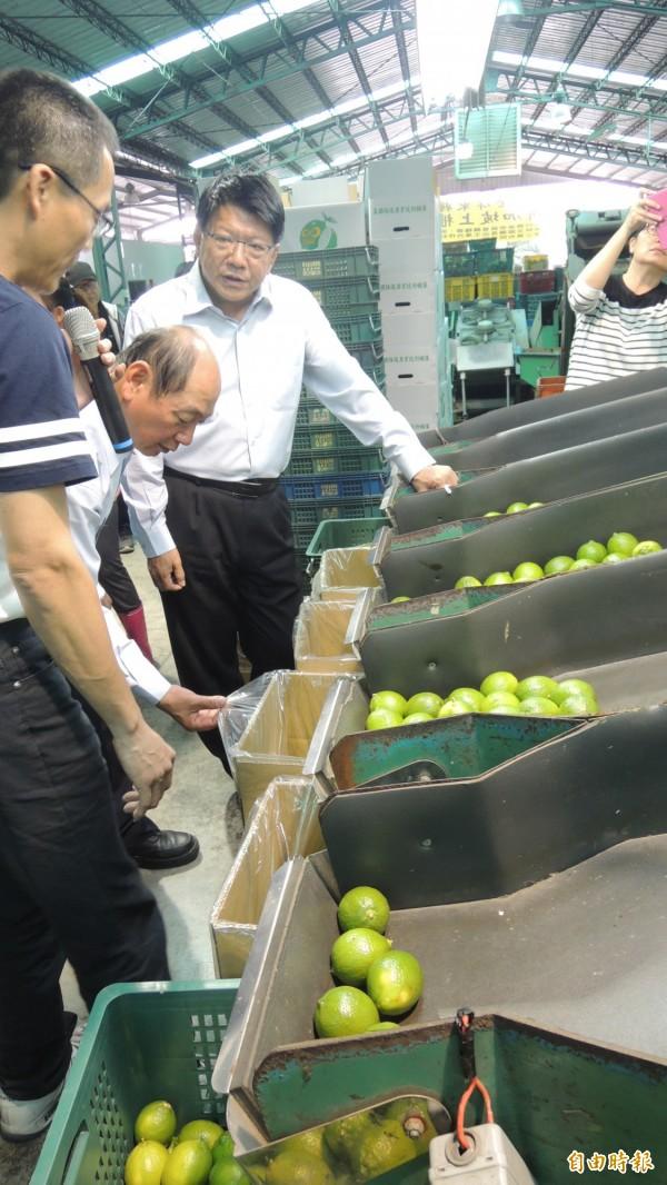 檸檬價格低迷,屏縣啟動外銷機制,縣長潘孟安(右)到合作社了解洗選分級過程。(記者羅欣貞攝)