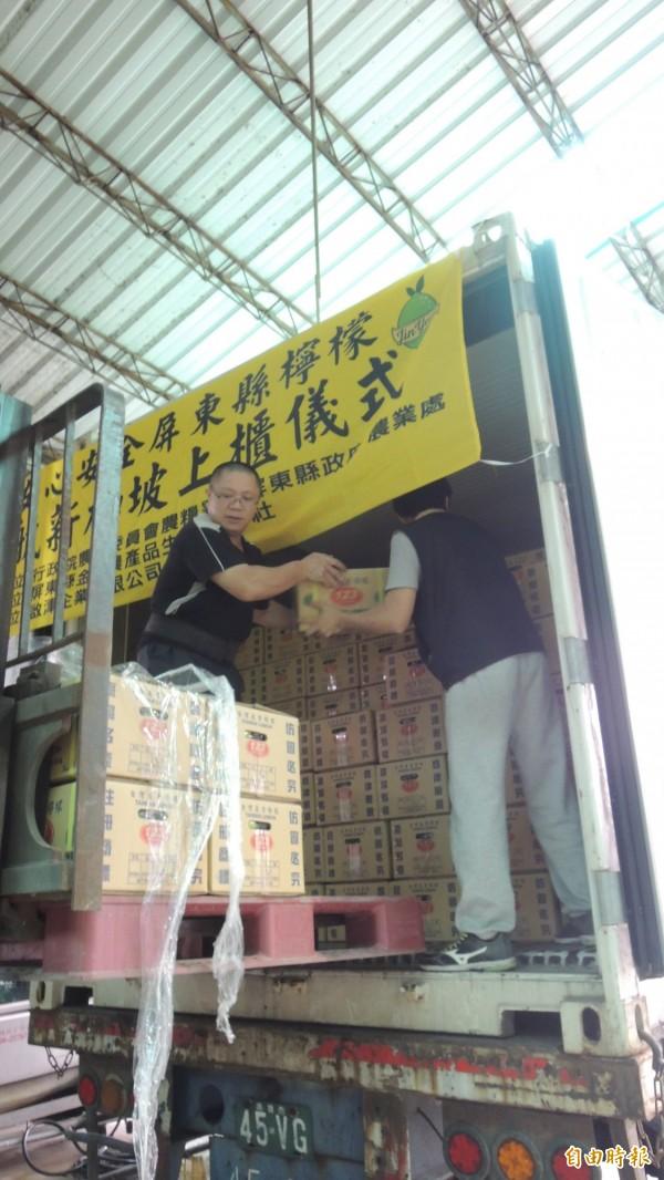 檸檬價格低迷,屏縣啟動外銷機制,首批今天下午裝箱。(記者羅欣貞攝)