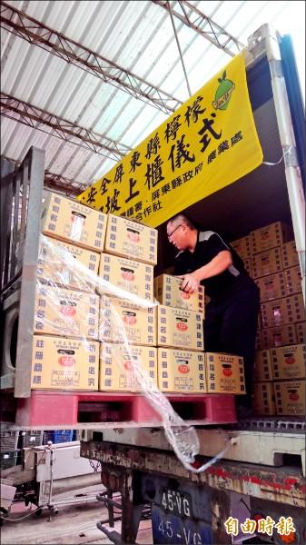 啟動檸檬外銷機制,首批貨櫃昨在金園農產品生產合作社裝箱。(記者羅欣貞攝)