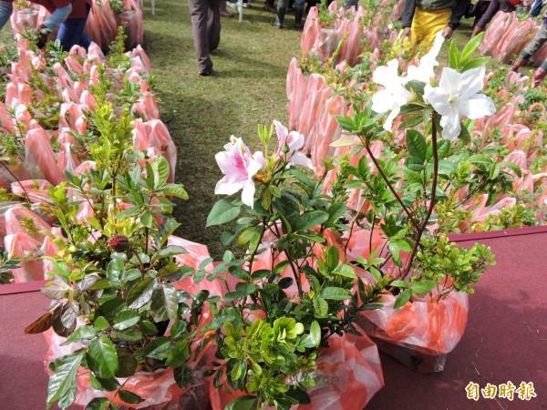 台東縣植樹月贈苗活動,10分鐘全部被領光光。(記者張存薇攝)