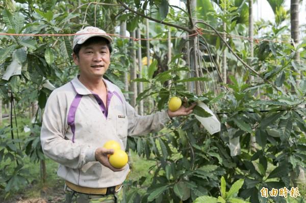 朱國寶自產自銷黃金果,1斤可以賣到200元,「錢」景看俏。(記者邱芷柔攝)