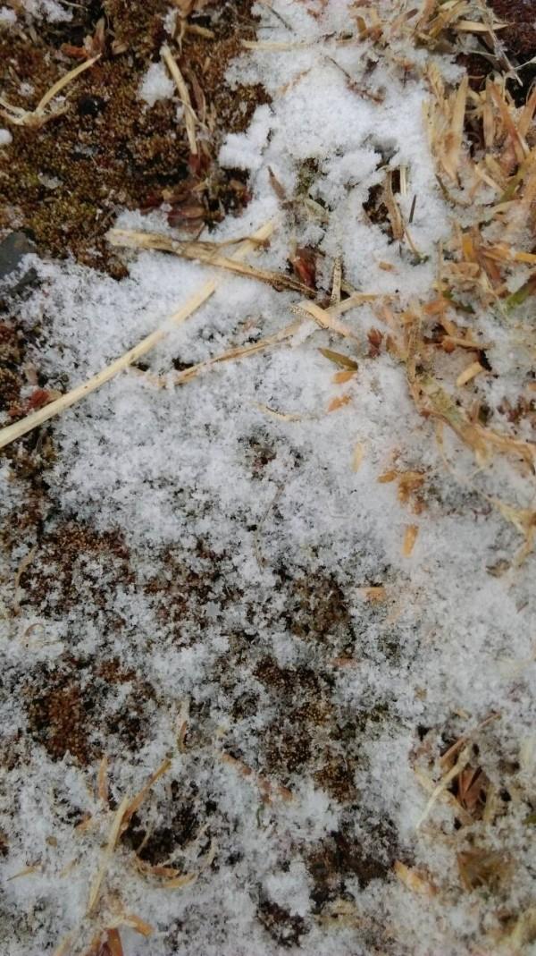 玉山降下3月雪,雖然雪勢不大,但主峰線部分路段仍有先前的積雪,雪深仍逾10公分。(氣象局提供)
