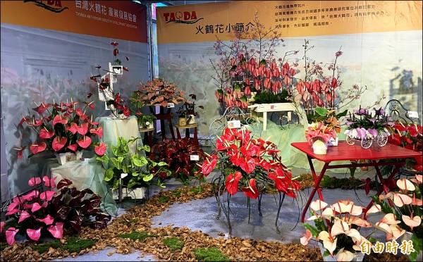 台灣火鶴花在蘭展蘭創館內的展區,展出紅色、粉紅、綠色和紫色等不同花色的火鶴花,十分吸睛。(記者楊金城攝)