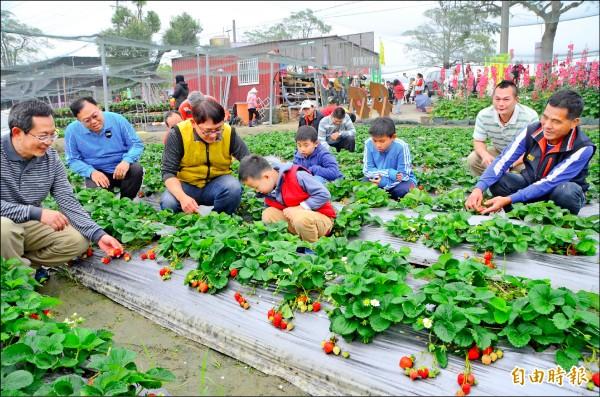 善化區草莓園湧現觀光人潮,郵政工會到場舉辦親子活動,氣氛熱烈。(記者吳俊鋒攝)