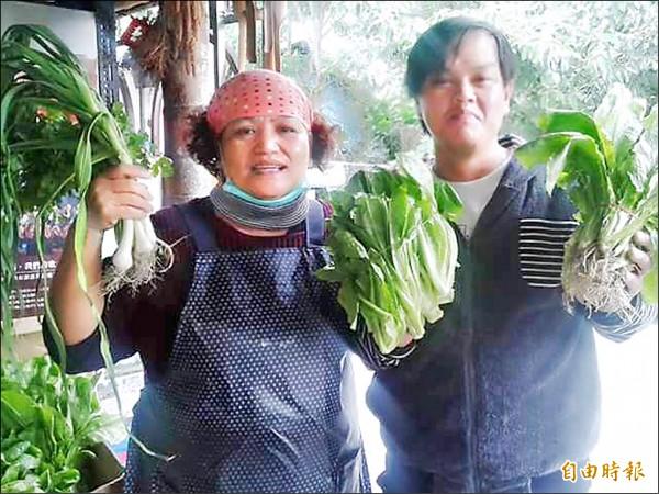 卡大地布山貓自然農耕農園蔬菜「大出」,搶購熱烈。(記者陳賢義攝)