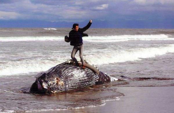 名為「征服」的作品獲得「鄂霍次克的四季」攝影大賽最優秀獎,但照片內容引起許多民眾不滿,認為攝影師不尊重自然生命。(圖擷取自朝日新聞)