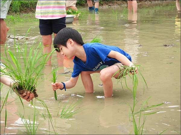 新北市政府與貢寮龍崗農友合作的「愛上水梯田認養活動」,內容包括農事體驗。(新北市政府農業局提供)