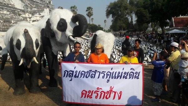泰國大城省目前正展出1600隻紙熊貓的藝術展,但當地的象園卻將大象彩繪成熊貓樣,引發網友正反意見論戰。(圖擷自Edwin Wiek推特)