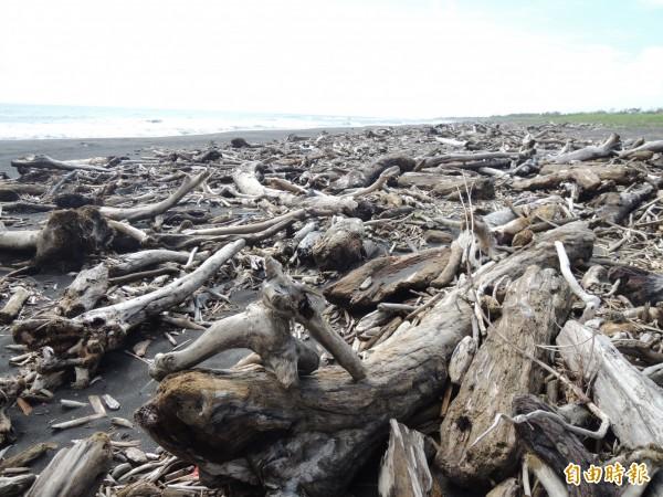 圖為蘇迪勒颱風過後,海邊遍布漂流木。(資料照,記者江志雄攝)