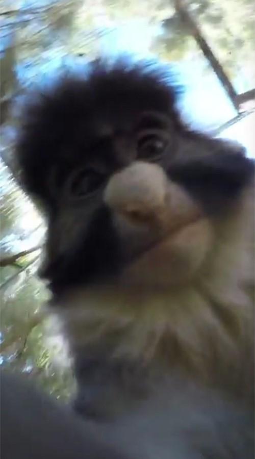 美國鳳凰城動物園發生了一件小猴子搶奪遊客攝影機的事件。最神奇的是,牠還對著鏡頭,錄了一段自拍影片,可愛的表情全被畫面給錄了下來。(圖擷自Trent Houdek / YouTube)