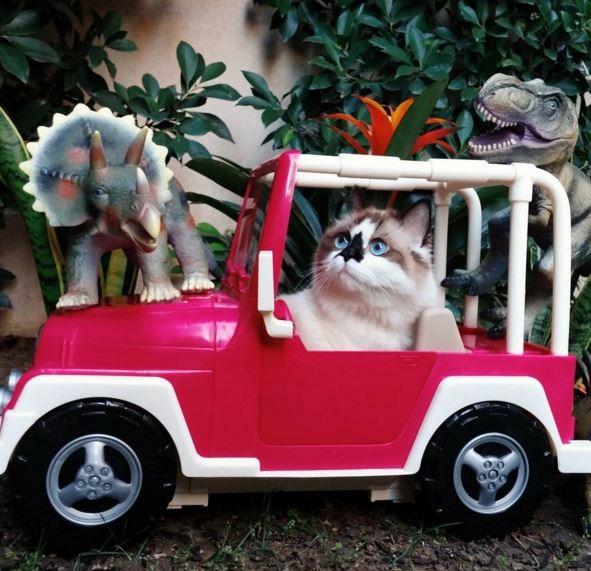 亞伯特都只能在家裡開開玩具車過過乾癮。(圖擷自「albertbabycat」instagram)