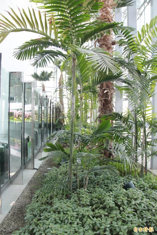 彰化高鐵站四周圍帷幕種滿植物,營造溫室綠廊。(記者陳冠備攝)