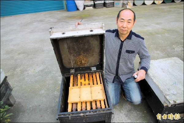 今年年初氣候異常,讓蜜蜂數量大量減少,蜂農徐陳森直呼這是他從業30年來首見。(記者鄭鴻達攝)