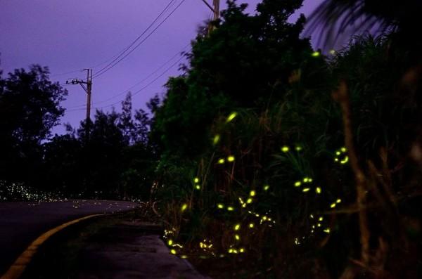 綠島螢火蟲點點,十分美麗。(梁致毅提供)