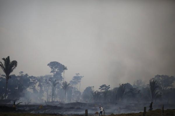 亞馬遜雨林的碳吸存能力減少,相當於每年減少吸收約台灣總人口60%的碳排放量。(路透)